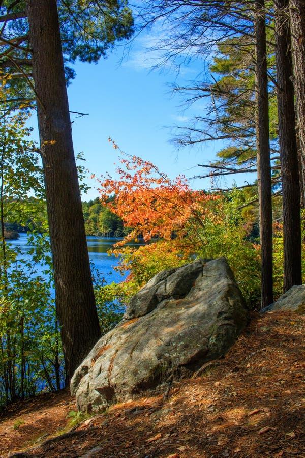 Bunter Baum im Herbst auf den Banken von Burr Pond lizenzfreies stockbild