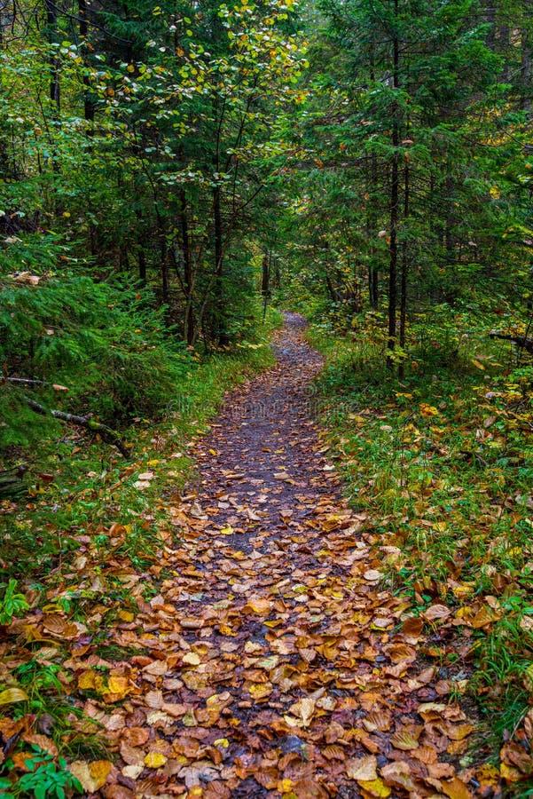 bunter Baum verl?sst im sonnigen Herbst in der Natur stockbild