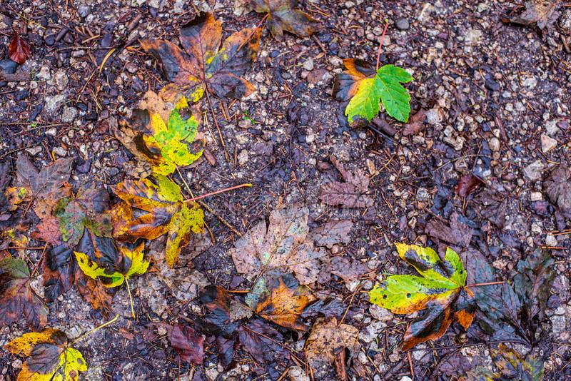 bunter Baum verl?sst im sonnigen Herbst in der Natur stockbilder