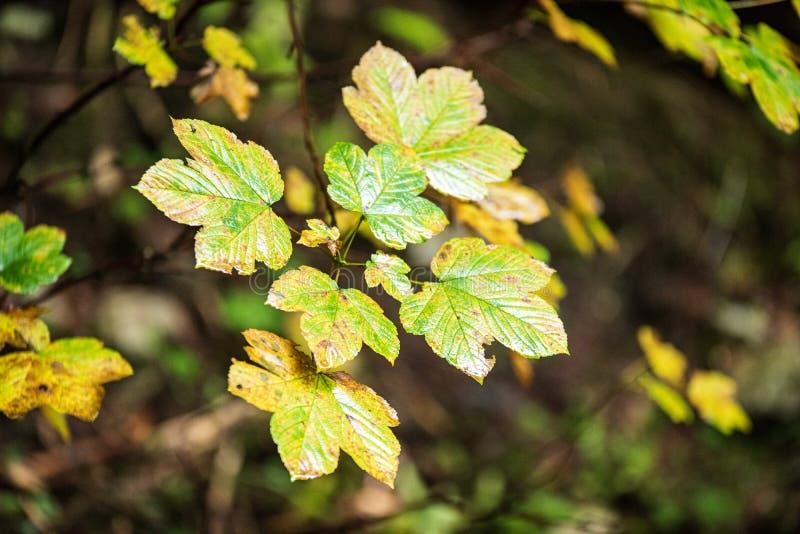 bunter Baum verl?sst im sonnigen Herbst in der Natur stockfoto