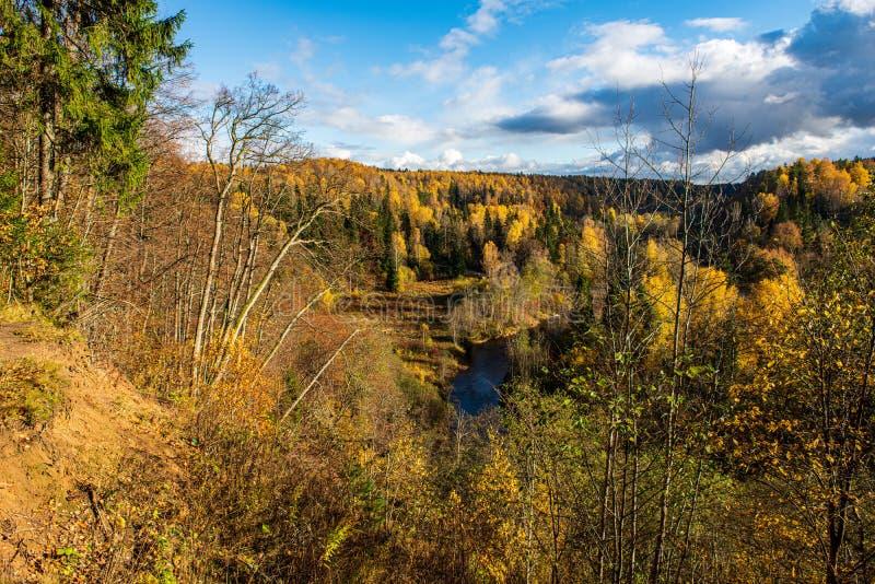 bunter Baum verl?sst im sonnigen Herbst in der Natur stockfotografie
