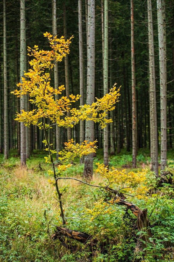 bunter Baum verl?sst im sonnigen Herbst in der Natur stockfotos