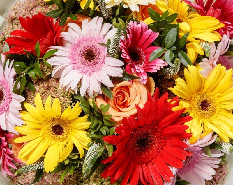 Bunter Blumenhintergrund Naturhintergrund von den Blumen Foto Gerbera getrennt auf weißem Hintergrund stockfotografie