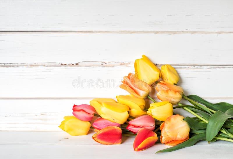 Bunter Frühling Tulip Flowers in den gelben, roten, orange Farben in einem Bündel, das auf weißes shiplap legt, verschalt mit Rau lizenzfreies stockfoto