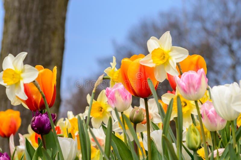 Bunter Garten der Blumen im Frühjahr stockfotos