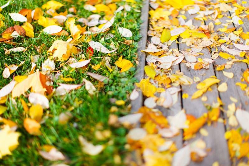Bunter gefallener Herbstlaub auf einem Boden lizenzfreies stockfoto