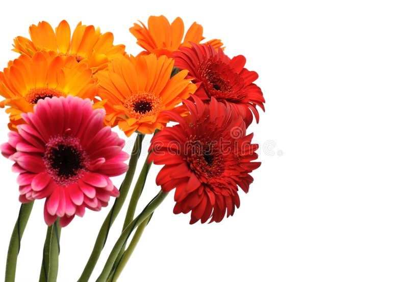 Bunter gerber Blumenstrauß stockbilder