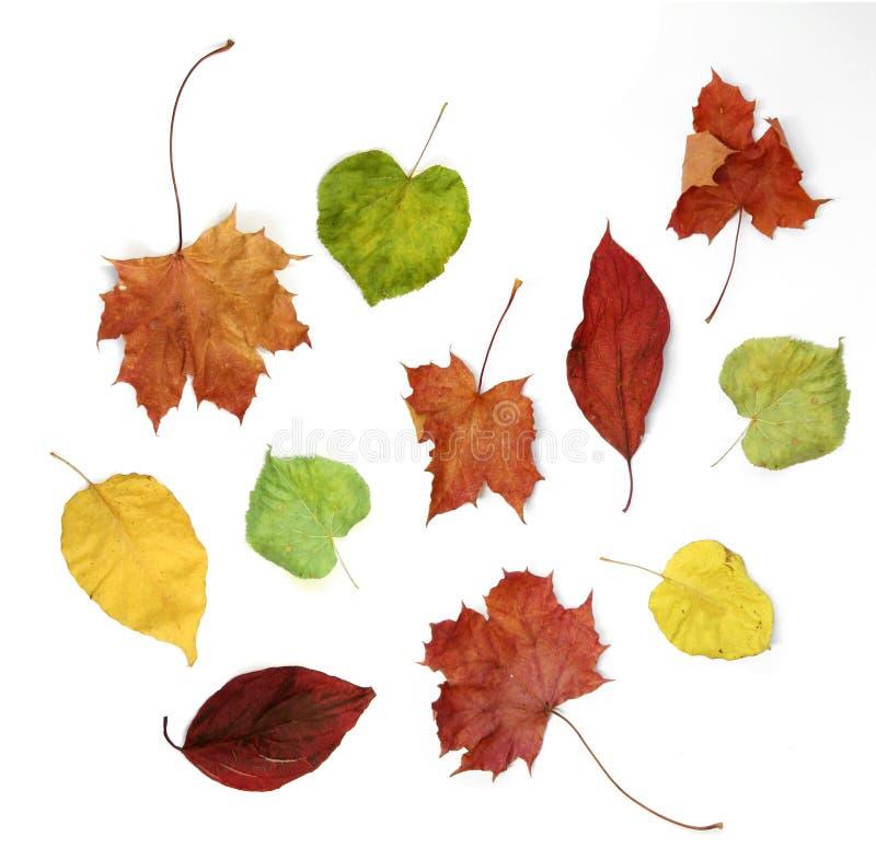 Bunter Herbst stockfotografie