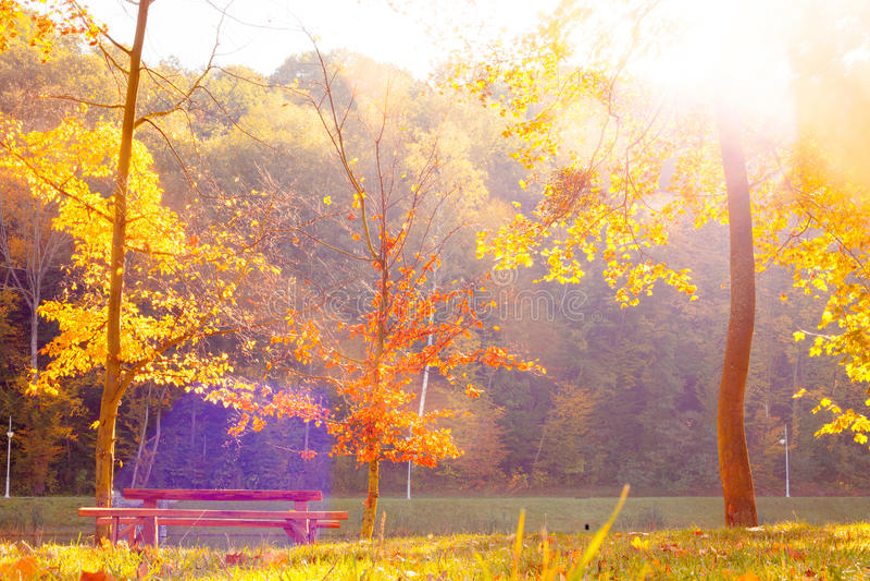 Bunter Herbst auf der Natur lizenzfreie stockbilder
