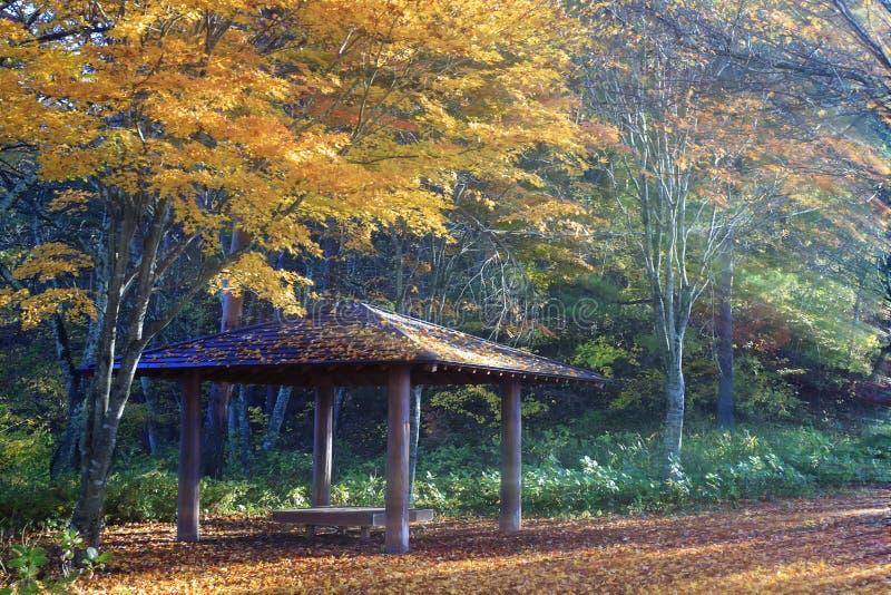 Bunter Herbst im Fujisan, Japan - See Kawaguchiko ist einer der besten Plätze in Japan stockbilder