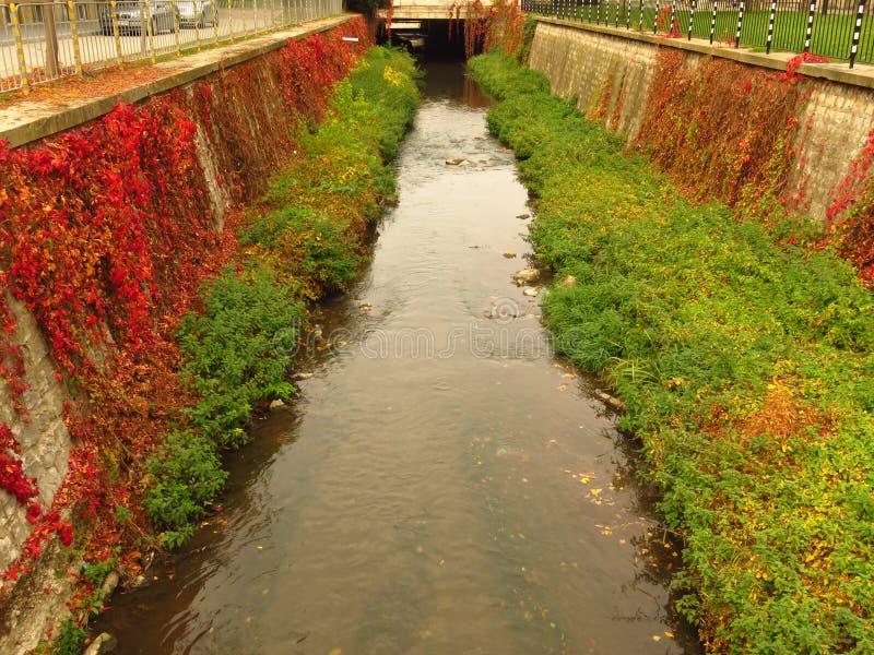 Bunter Herbst Rote und grüne Strauchbuschblätter Ein kleiner, schmaler Fluss Herbstflussbänke lizenzfreie stockfotografie