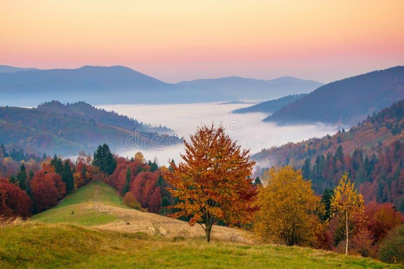Bunter Herbstabend nach Sonnenuntergang in den Karpatenbergen lizenzfreie stockfotografie