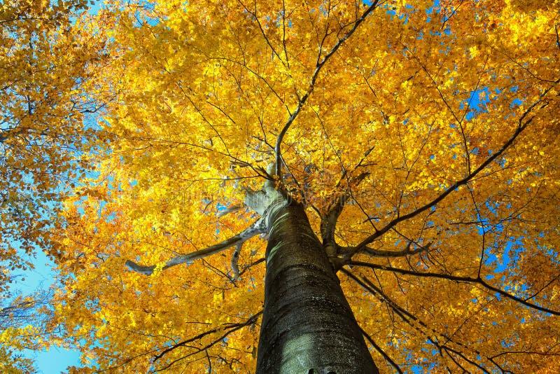 Bunter Herbstbaum im Wald stockbild