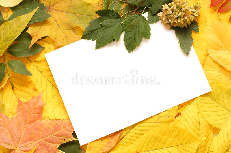 Bunter Herbstblattrand lizenzfreies stockbild