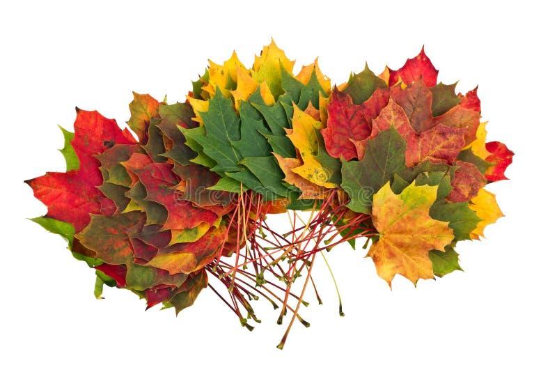 Bunter Herbstfall lässt Ahorn stockfoto
