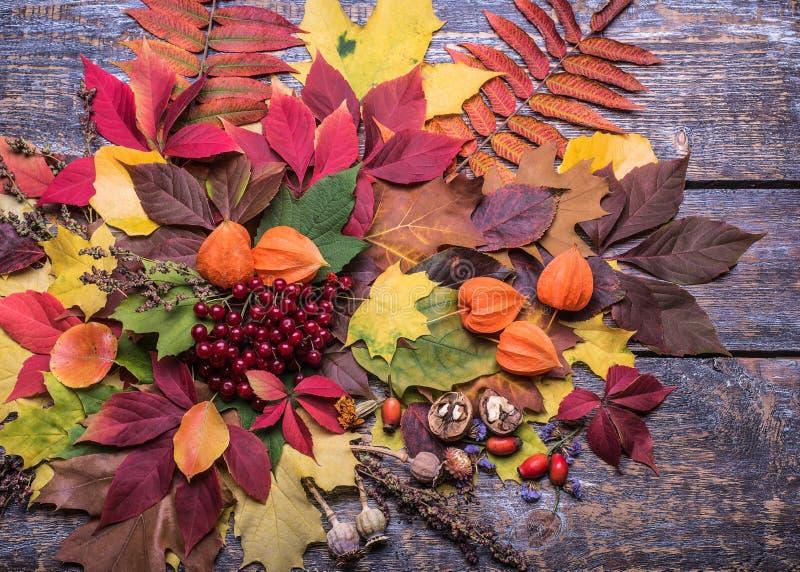 Bunter Herbsthintergrund mit Farbblatt, Physalis, dogrose, Mohnblume auf einem Holztisch lizenzfreie stockfotos