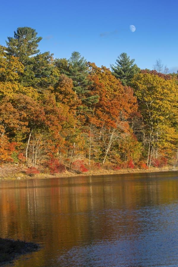 Bunter Herbstlaub auf Küstenlinie mit Reflexionen in Mansfield lizenzfreies stockbild