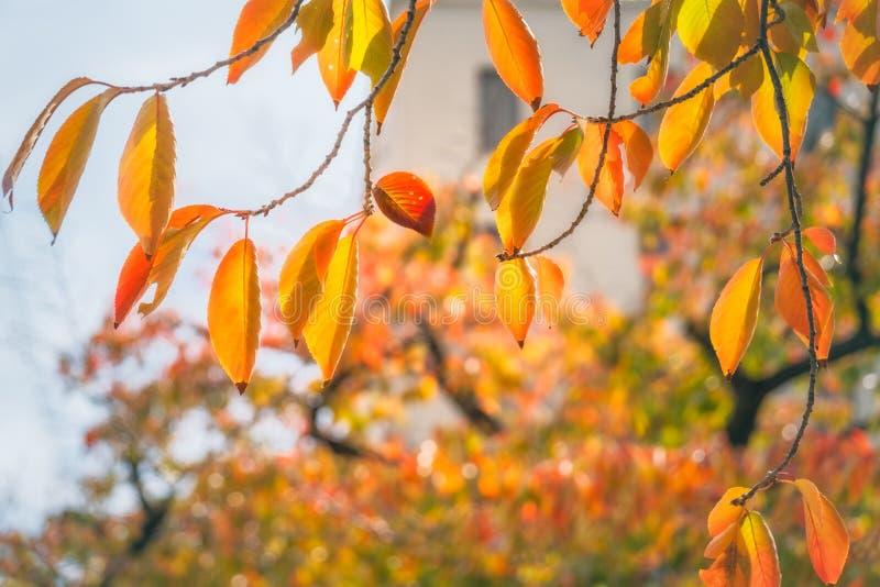 Bunter Herbstlaub in einem Park in Osaka stockfotografie