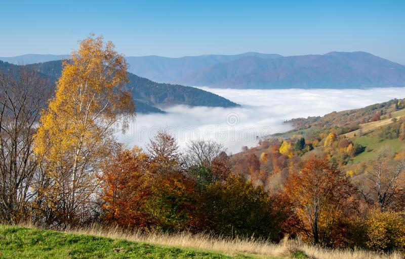 Bunter Herbstmorgen in den Karpatenbergen stockbilder