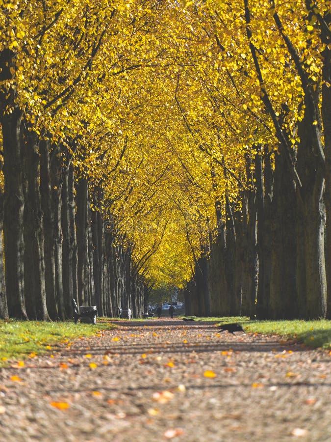 Bunter Herbsttag der Parkpromenade stockfotografie