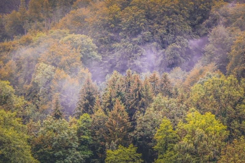 Bunter Herbstwald fotografiert auf nebelhaftem Morgen von oben Schwerm?tige Landschaft Holz im Fall Hippie-Weinleseretrostil duns stockbild