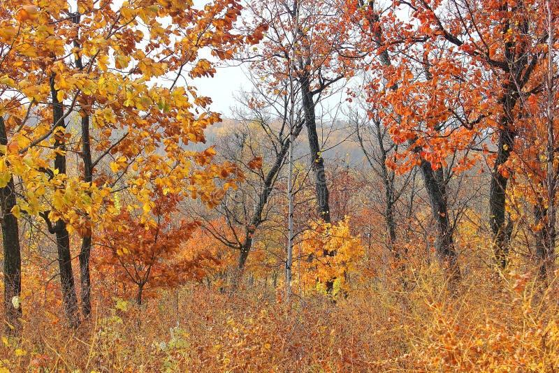 Bunter Herbstwaldaufstand von Farben Indischer Sommer Autumn Landscape Wege im Wald stockfotos