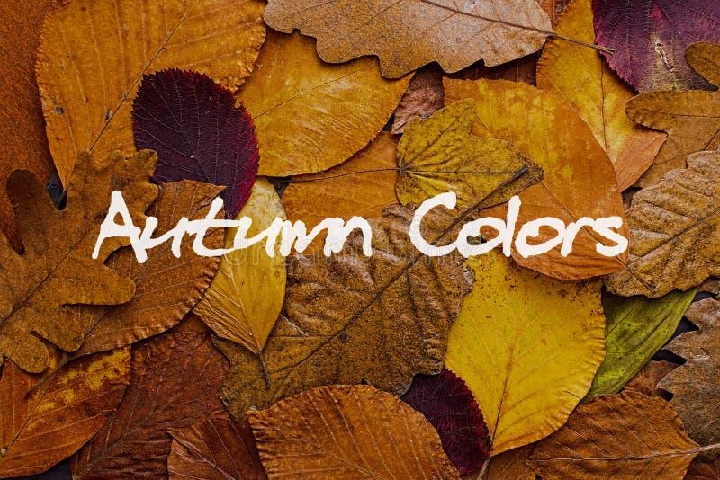 Bunter Hintergrund der Herbstblätter Autumn Colors Concept Wallpaper stockfoto