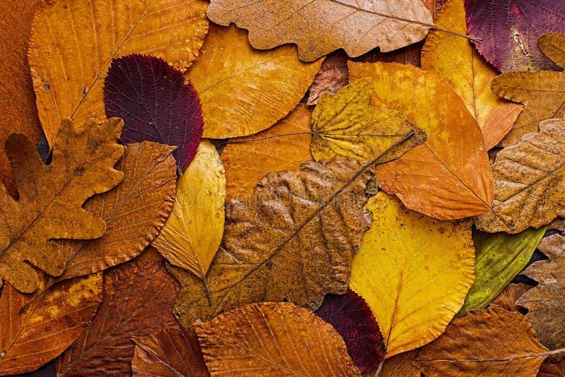 Bunter Hintergrund der Herbstblätter Autumn Concept Wallpaper stockfotos