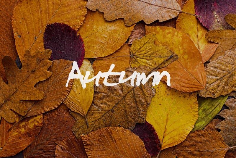 Bunter Hintergrund der Herbstblätter Autumn Concept Wallpaper stockbild