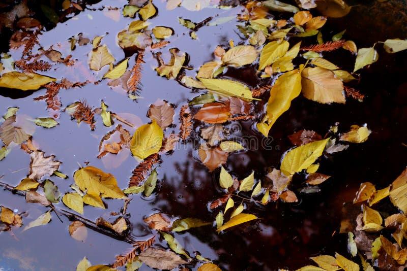 Bunter Hintergrund der trockenen Herbstblätter stockbild