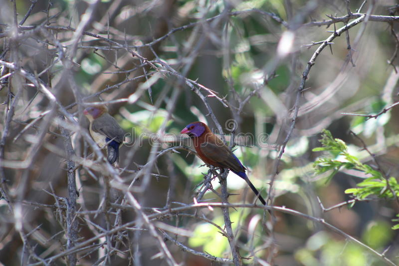 Bunter kleiner Vogel stockfotografie