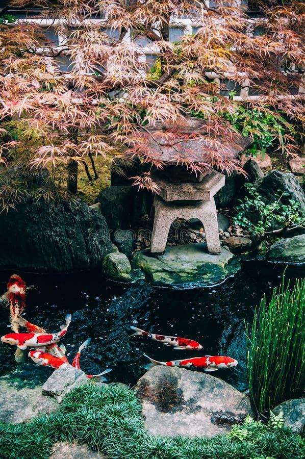 Bunter Koi Carp Fish im japanischen Gartenteich mit Anlagen, tre stockbild