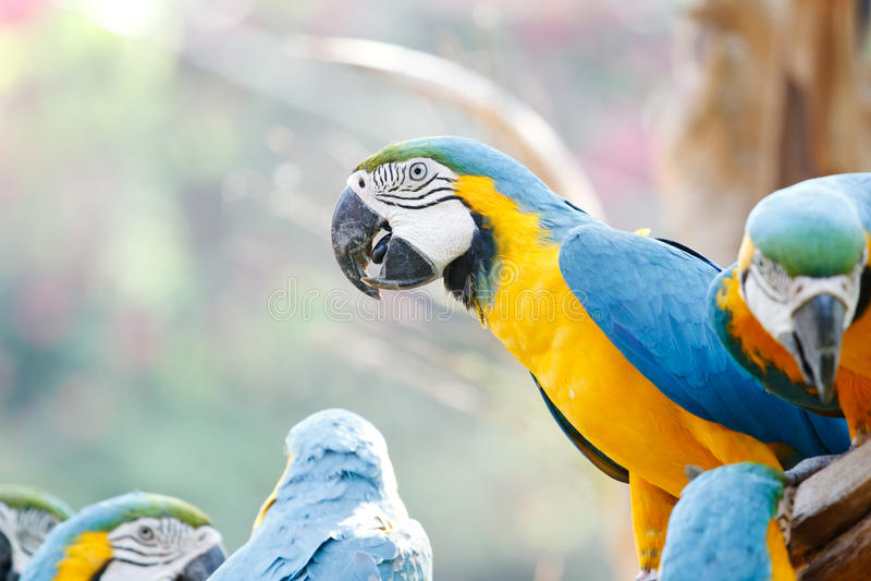 Bunter Macaw lizenzfreies stockbild