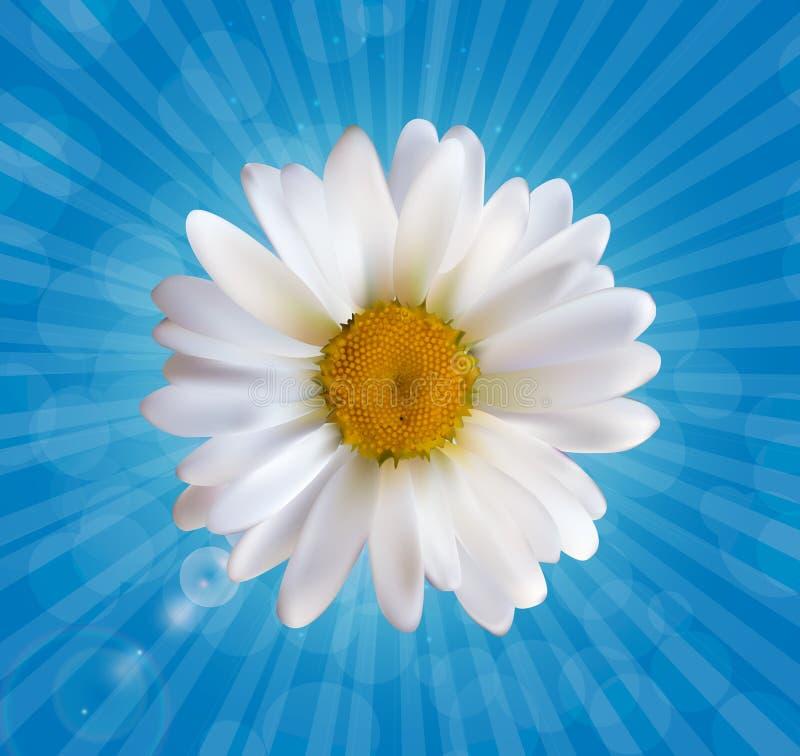Bunter naturalistischer schöner Hintergrund-Vektor I der Kamillen-3D lizenzfreie abbildung