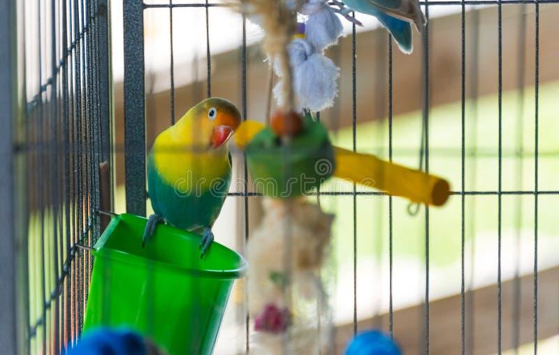 Bunter Papagei, der auf einem Baumast sitzt stockbild
