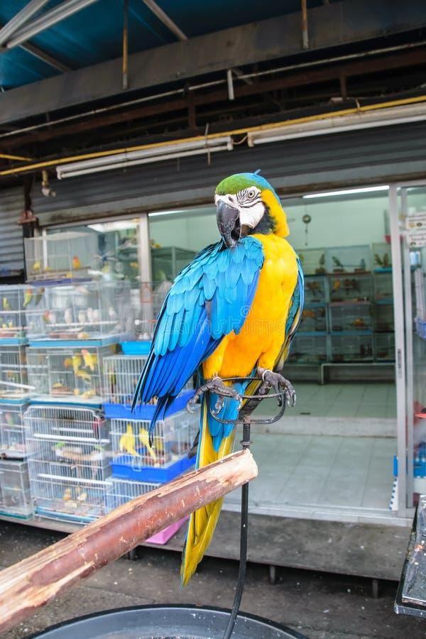 Bunter Papagei vom Geschäft für Haustiere lizenzfreie stockfotografie