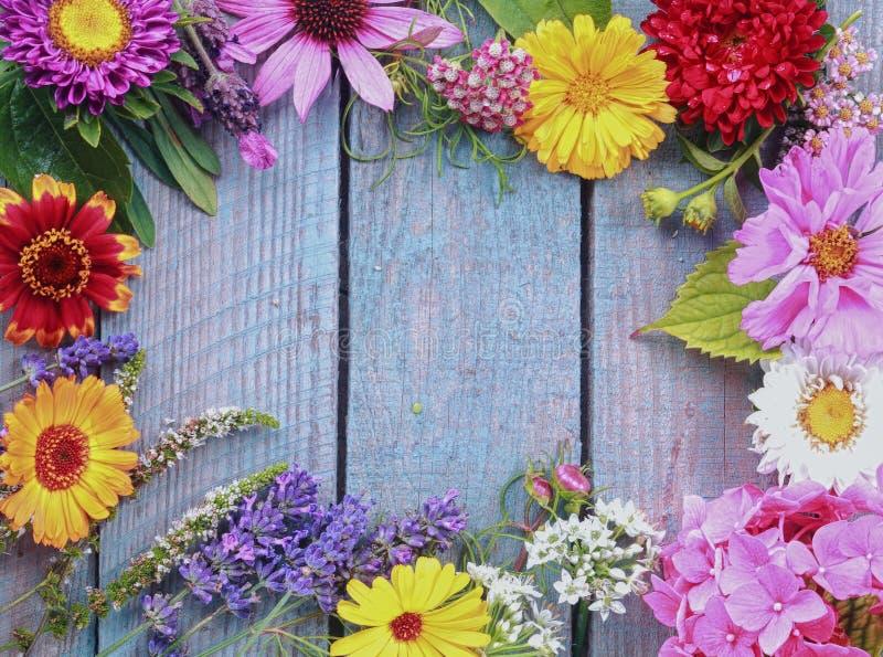 Bunter Rahmen von frischen Sommerblumen stockfotografie