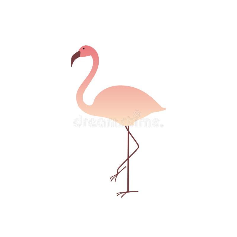 Bunter rosa Flamingo lokalisiert auf weißem Hintergrund lizenzfreie stockfotografie