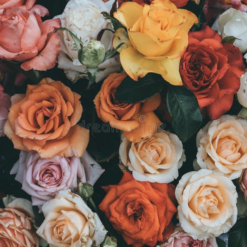 Bunter Rosenhintergrund, frische blühende Blumen nah oben lizenzfreies stockfoto
