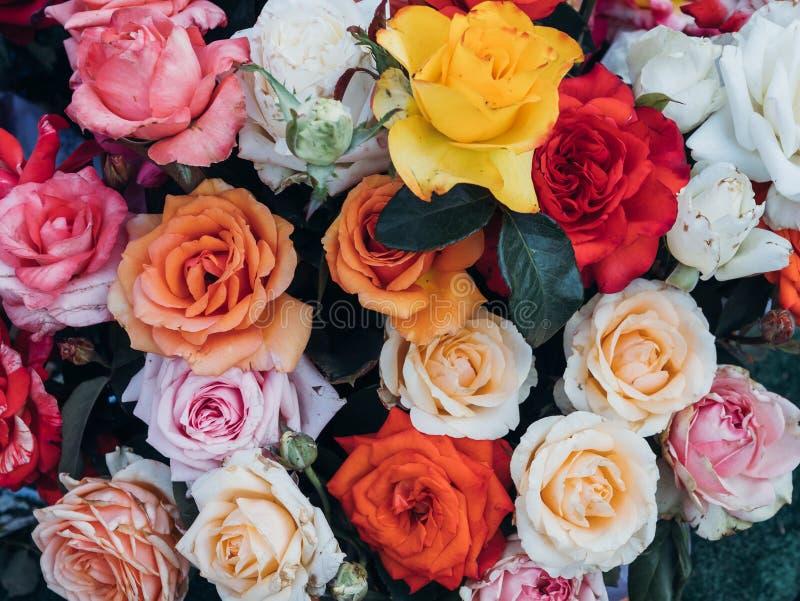 Bunter Rosenhintergrund, frische blühende Blumen nah oben lizenzfreie stockfotos