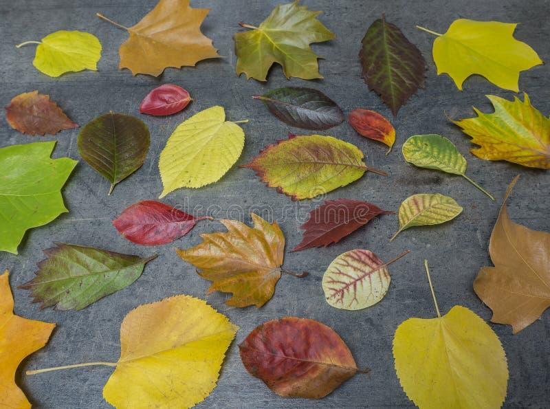 Bunter roter gelber und grüner gefallener Herbstlaub auf Schmutz gra lizenzfreie stockfotos