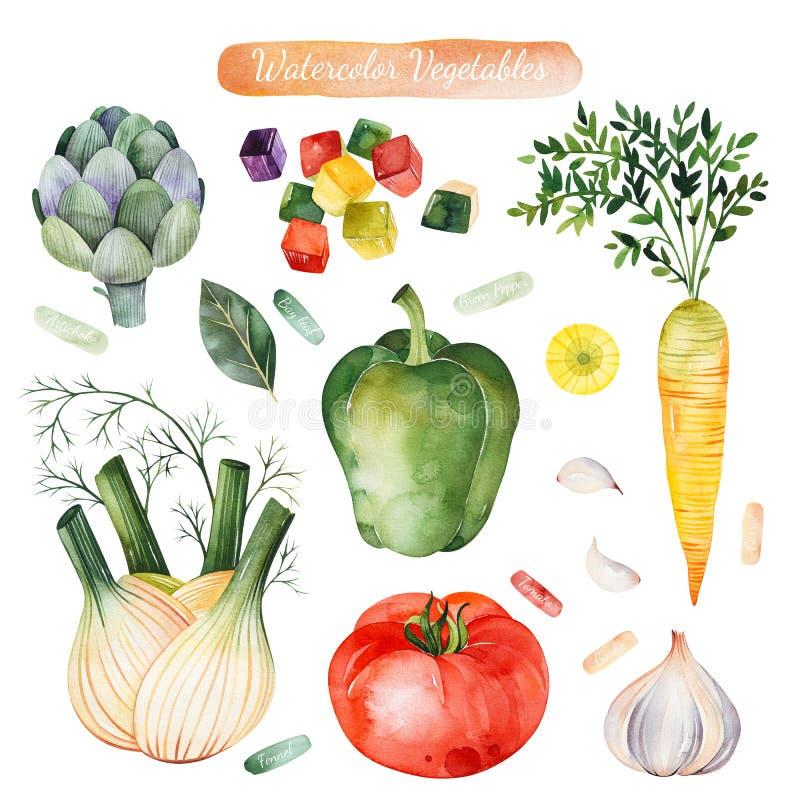 Bunter Satz mit Tomate, Karotte, grüner Paprika, Artischocke, Fenchel, Knoblauch lizenzfreie abbildung