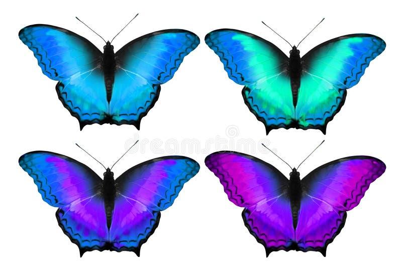 Bunter Schmetterling im kühlen Ton, lokalisierter Hintergrund lizenzfreie abbildung