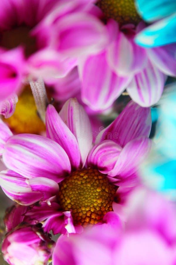 Bunter Sommerblumenblumenstrauß stellte während eines speziellen Lebenmomentes ein lizenzfreies stockfoto