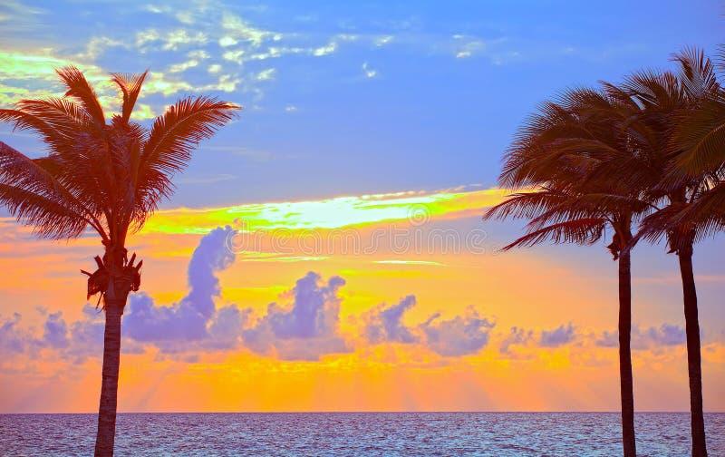 Bunter Sommersonnenaufgang des Miami Beachs, Floridas oder Sonnenuntergang mit Palmen stockfotos