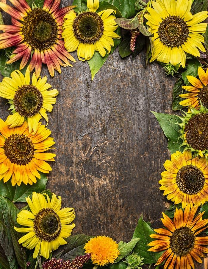 Bunter Sonnenblumenrahmen auf rustikalem hölzernem Hintergrund, Draufsicht lizenzfreies stockfoto