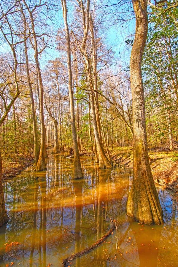 Bunter Stauwasser-Wald stockfoto