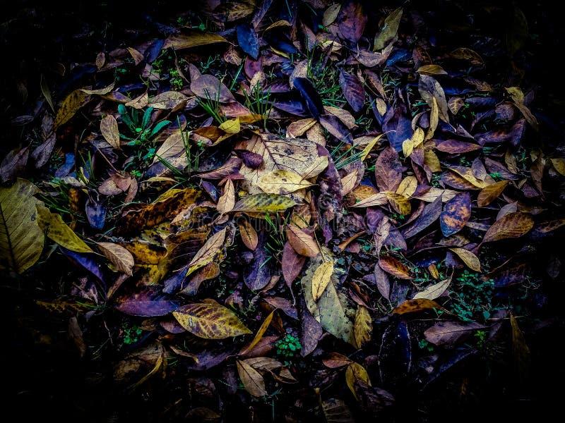 Bunter vibrierender und heller Hintergrund gemacht von gefallenem Herbstlaub lizenzfreie stockfotografie