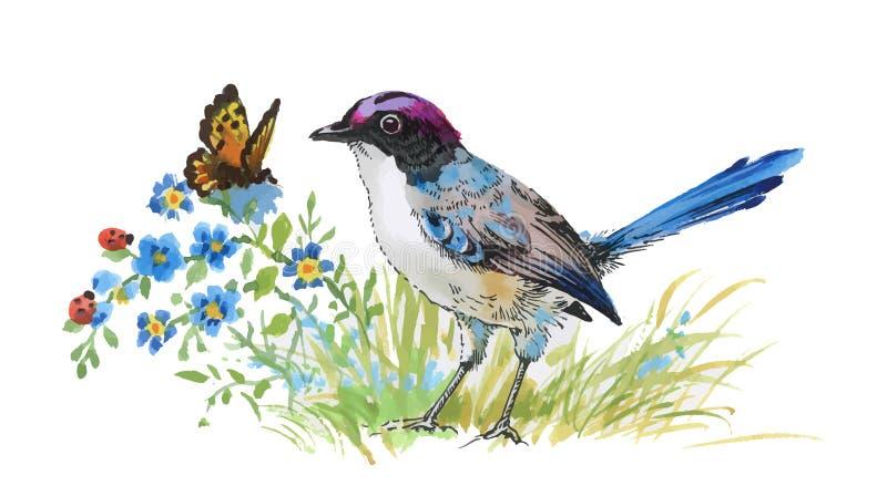 Bunter Vogel und Schmetterling des Aquarells mit Gras und Blumen vektor abbildung