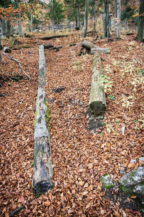 Bunter Wald des Herbstes mit toten gefallenen Bäumen stockfoto